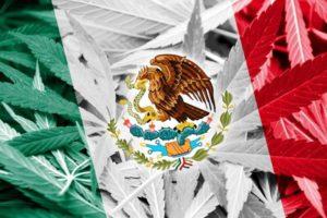 Czy rząd Meksyku całkowicie zalegalizuje narkotyki ?
